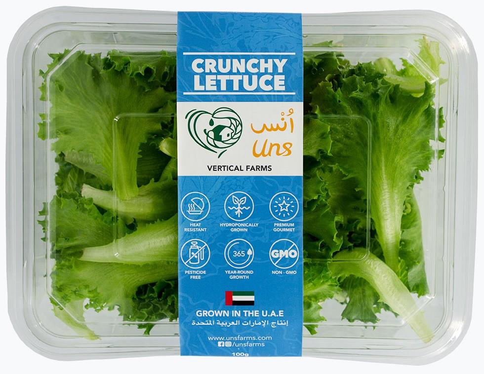 Crunchy Lettuce